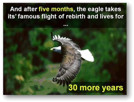 Fascinating life of America's Bald Eagle